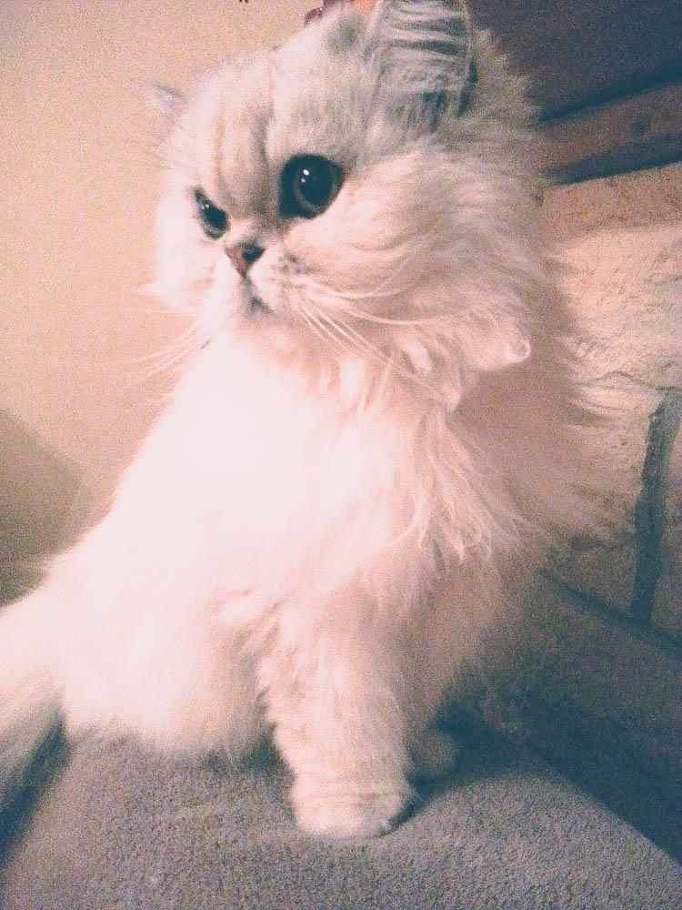 propreté-du-chat-litière-catsbest-test-produit-blog-lifestyle-mode-enfant-famille-ecologique-chat-persan